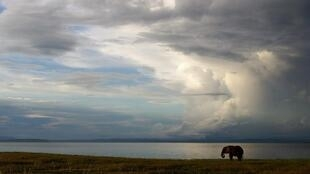 An elephant feeds along the southern shoreline of Lake Kariba, Zimbabwe