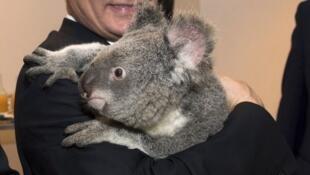 Как и остальные мировые лидеры, на саммите в Брисбене Владимир Путин сфотографировался с коалой.