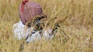 Des villageois, en conflit ouvert avec des sociétés auxquelles le gouvernement a octroyé des concessions économiques, recourent à la violence.
