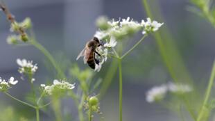 Пчеловоды Ростовской области решили подать в суд на агрокомплекс из-за гибели пчел