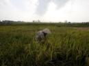 EVFTA : Nông sản Việt Nam phải đáp ứng tiêu chuẩn gắt gao
