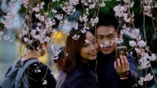 Un couple se prend en photo sous un cerisier en fleur à Tokyo en mars 2018 (illustration).