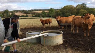 Un éleveur de la Creuse remplit deux abreuvoirs pour ses bœufs. Le département a reçu deux fois moins de pluie ces 12 derniers mois que d'habitude.
