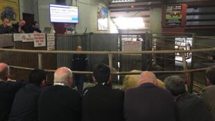 Enchères au marché aux bestiaux de Sallina (comté de Mayo, Irlande).
