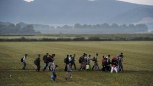 Un groupe de migrants traverse un champ, non loin de la frontière entre la Grèce et la Macédoine, le 4 septembre 2015.