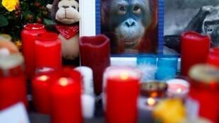 در جریان آتش بازی شب سال نو محل نگهداری میمون ها در شهر کرفلد واقع در غرب آلمان به آتش کشیده شد و دست کم ۳۰ میمون کمیاب از جمله ۸ میمون شبیه انسان سوختند.