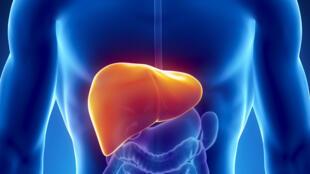 L'hépatite C, une maladie contagieuse du foie.