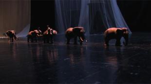 """Espectáculo """"A Caminhada dos elefantes"""""""