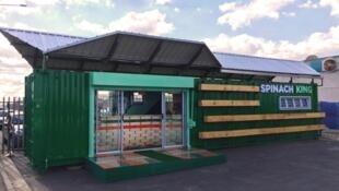 Le restaurant « Spinach King » est installé dans un contrainer vert, en bordure du centre commercial, dans le township de Khayelitsha près du Cap