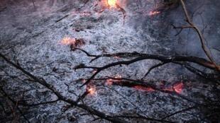Một khu rừng Amazon cháy rụi ở Canarana, bang Mato Grosso, Brazil. Ảnh 26/08/2019.