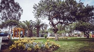El distrito limeño de San Borja se destaca por sus esfuerzos de rearbolado urbano.