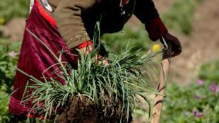 Mujer trabajadora en el campo de Ecuador