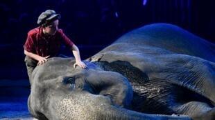 Париж больше не будет давать земли под цирки с дикими животными