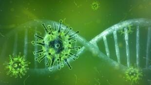 Coronavirus / Covid-19 Virus