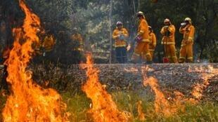 Пожары в Австралии уничтожили среду обитания сотен исчезающих видов растений и животных.