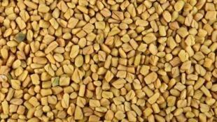 O feno-grego é utilizado na agricultura orgânica como fertilizante natural.