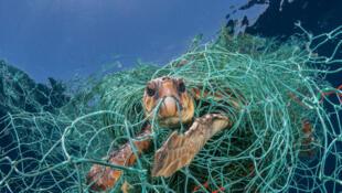 Cada año, 8 millones de toneladas de plástico terminan en nuestros océanos.