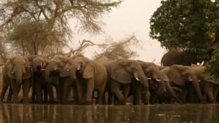 Tembo karibu na sehemu ya maji nchini Tchad