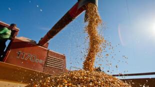 Cereais integrais, como trigo, aveia, arroz e quinoa, podem diminuir o risco de doença cardíacas.