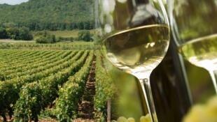 A Burgundy vineyard