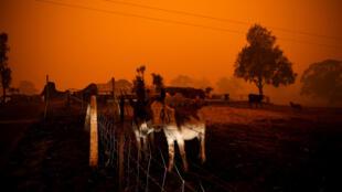 Cháy rừng bang New South Wales- Úc. Ảnh ngày 05/01/2020.