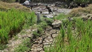 Một kênh khô hạn tại  tỉnh Sóc Trăng. Ảnh chụp ngày 08/03/2016.