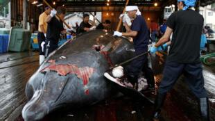 Китовое мясо до сих пор пользуется популярностью среди японцев