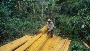 Coupe de bois au Cameroun.