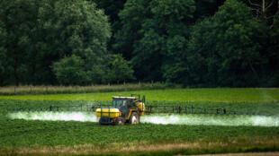 Pulverización de pesticidas en un campo de hortalizas, Bailleul, Francia.