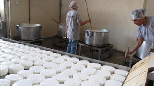 Trays of halloumi or hellim cheese