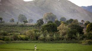 La société émiratie Elite Agro LLC projette de cultiver 60 000 hectares de terres, notamment du riz, du maïs et du soja (image d'illustration).