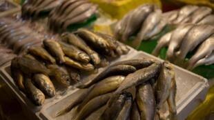 L'agence gouvernementale américaine en charge des océans accuse la Corée du Sud de ne pas faire assez d'efforts pour obliger ses navires à respecter les quotas de pêche selon un rapport publié la semaine dernière.