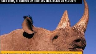 Tổ chức WWF CITES báo động về tê giác, động vật trên đà bị tuyệt chủng.