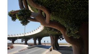 «Pont et arbres artificiels, Dubaï, 2018» s'expose aux Rencontres de la photographie d'Arles jusqu'au 22 septembre 2019.