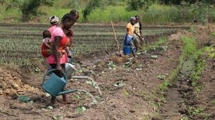 Des ouvriers restaurent des champs et des étangs dans une coopérative agricole et piscicole de Mindouli dans la région du Pool, au sud de Brazzaville.