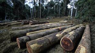 Logging in Gabon.