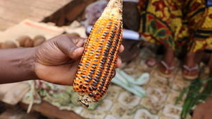 ADI recusa debater a questão do milho