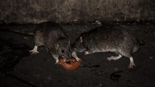 Lassa is transmitted by contact with rodents and their excrement