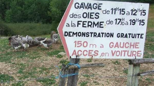 A french farmer invites tourists to watch gavage twice daily
