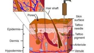 Esquema mostra como funciona tatuagem que detecta niveis sanguineos