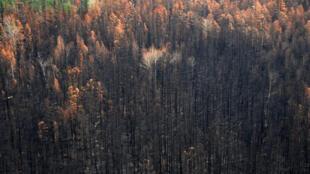 Une vue aérienne prise depuis un hélicoptère montre une zone brûlée par des incendies de forêt dans le district de Boguchansky, dans le Krai de Krasnoyarsk, en Russie, le 4 août 2019.