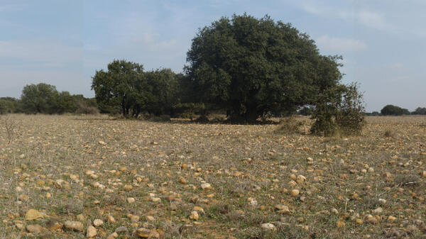The Crau plains in the Camargue region, south west France