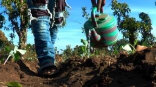 Un agriculteur dans la plaine de Timbi Touni dans le Fouta Djalon, en Guinée.