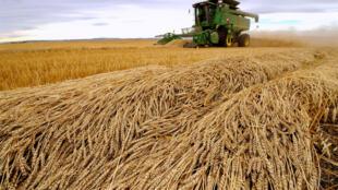 D'ici trente ans, il faudra augmenter la production agricole mondiale de 50%.