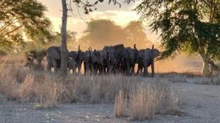 Moçambique assina acordo para Programa de Monitoria da Morte Ilegal do Elefante
