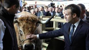 លោកEmmanuel Macron ក្នុងទីតាំងពិព័រណ៍កសិកម្មប្រចាំឆ្នាំលើកទី ៥៥ នៅទីក្រុងប៉ារីស ថ្ងៃទី ២៤កុម្ភៈ ២០១៨