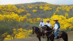 Imagen de la reserva de la biósfera transfronteriza bosques de paz entre Ecuador y Perú.