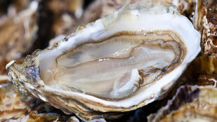 В департаменте Приморская Шаранта на западе Франции, где производится треть всех французских устриц, в этом году были украдены 24,7 тонн устриц