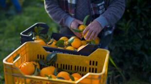 L'Italie, très fortement touchée par l'épidémie, souffre également dans son secteur agricole.