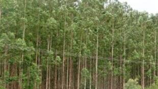 Zona florestal em Moçambique